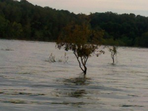 Drowning Tree With Waters At Flood Level
